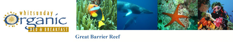The Great Barrier Reef is said to be the largest structure on earth ever created by living creatures.